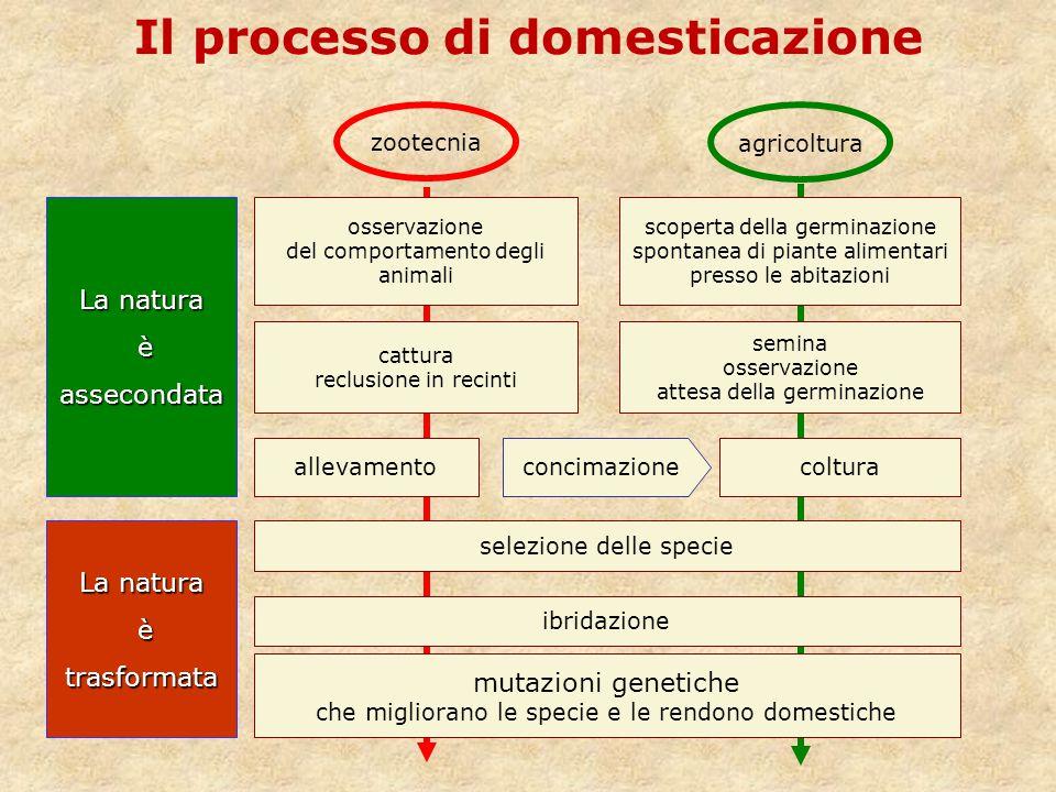 Il processo di domesticazione