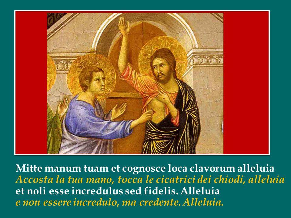 Mitte manum tuam et cognosce loca clavorum alleluia