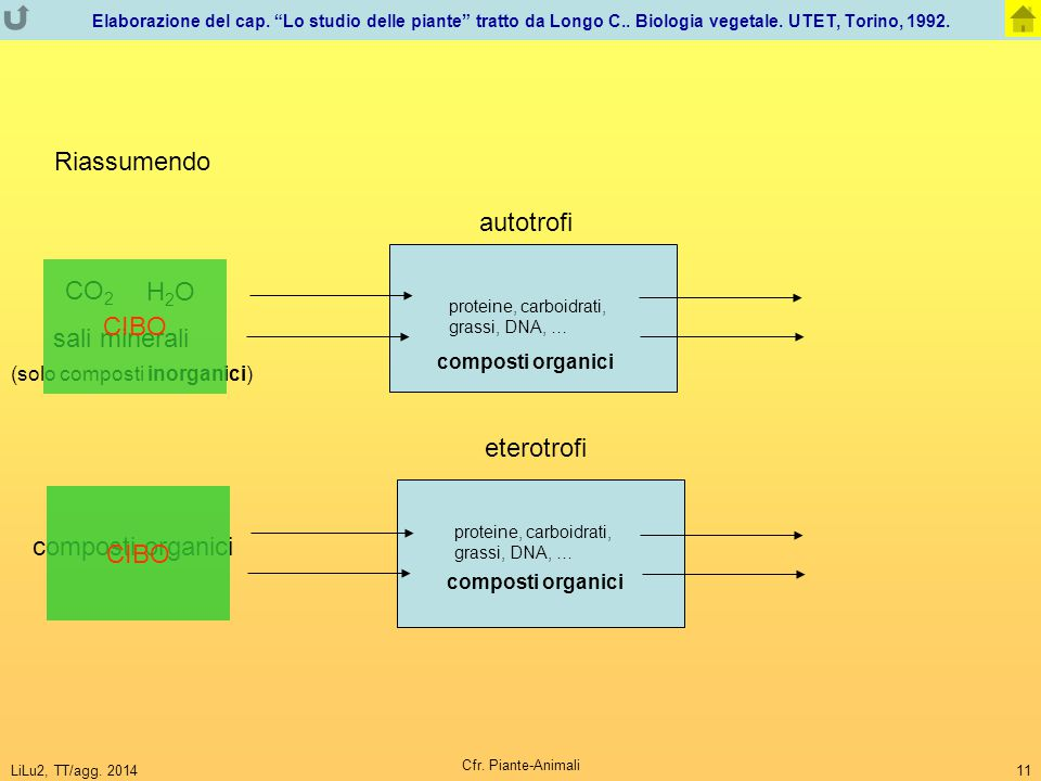 Riassumendo autotrofi CO2 H2O CIBO sali minerali eterotrofi CIBO