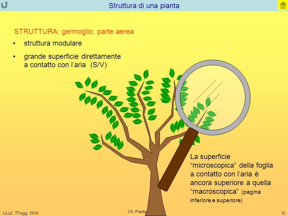 Struttura di una pianta