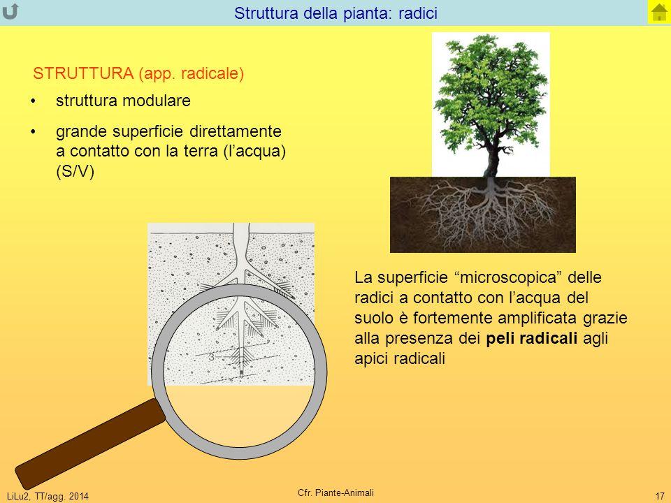 Struttura della pianta: radici