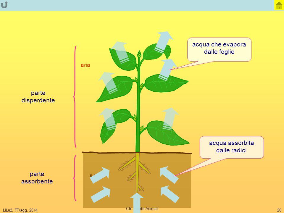 acqua che evapora dalle foglie