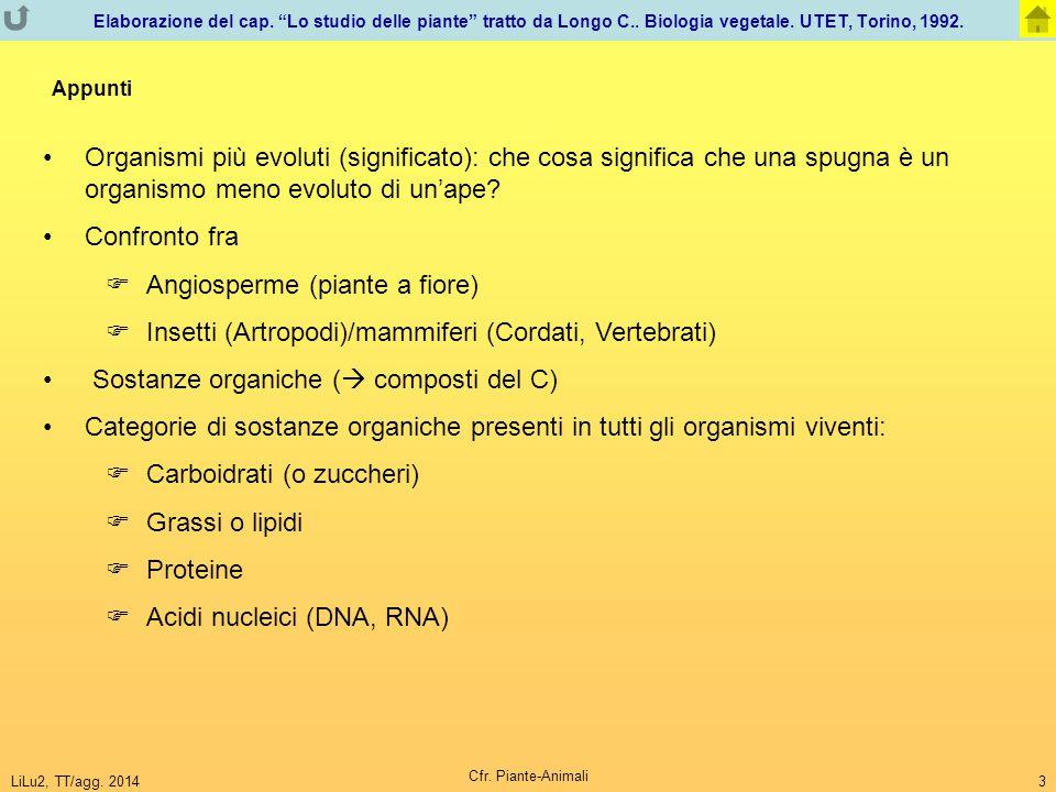 Angiosperme (piante a fiore)