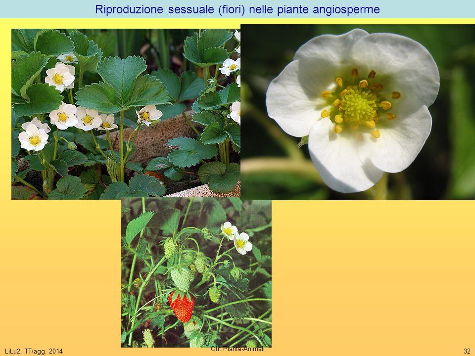 Riproduzione sessuale (fiori) nelle piante angiosperme
