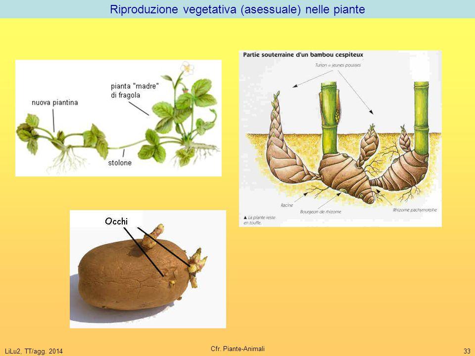 Riproduzione vegetativa (asessuale) nelle piante