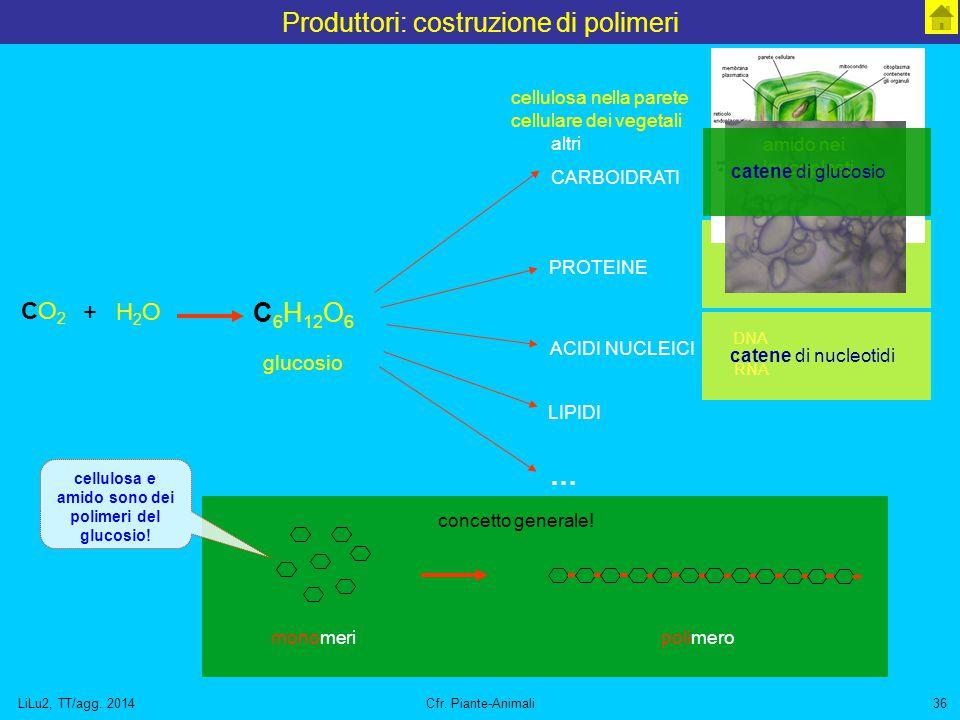 Produttori: costruzione di polimeri