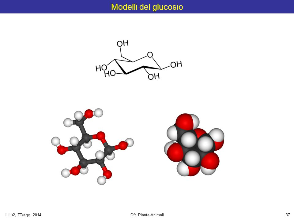 Modelli del glucosio LiLu2, TT/agg. 2014 Cfr. Piante-Animali