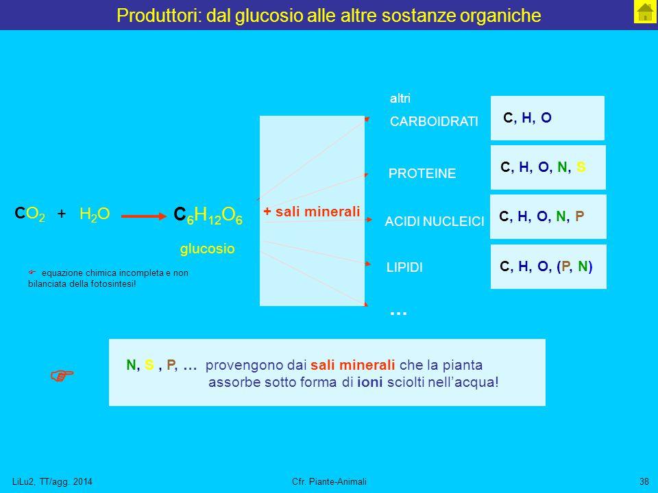 Produttori: dal glucosio alle altre sostanze organiche