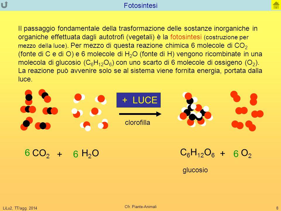 + LUCE 6 CO2 C6H12O6 H2O O2 + Fotosintesi