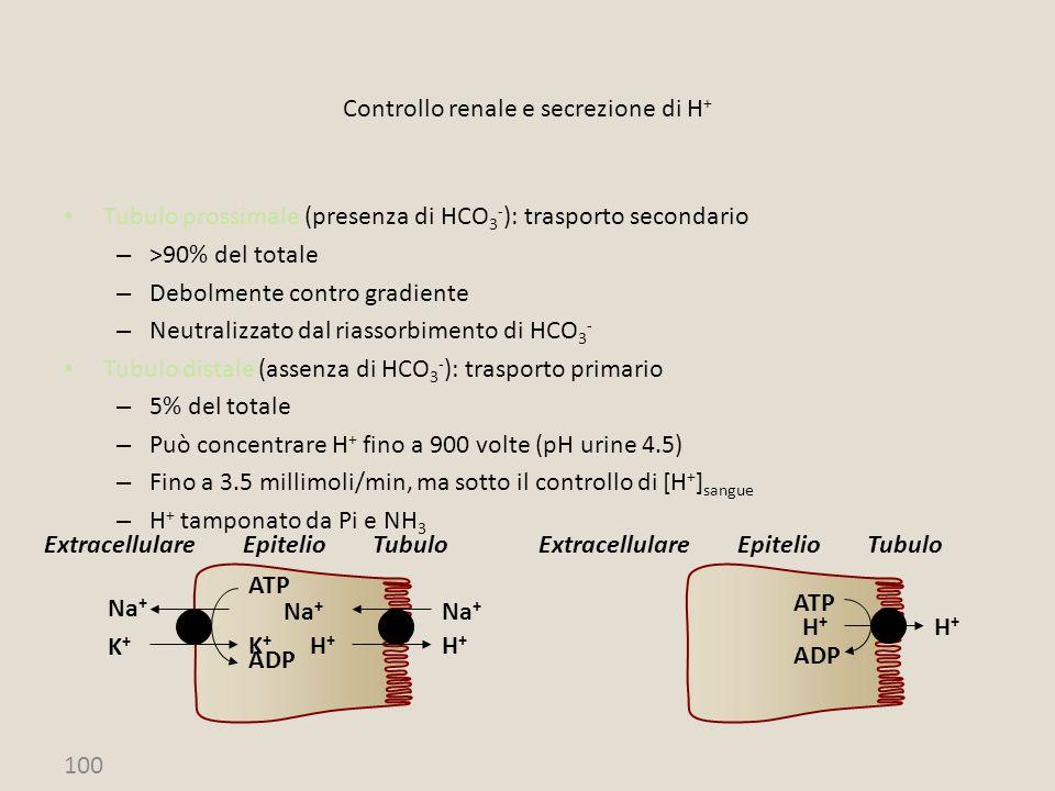 Controllo renale e secrezione di H+