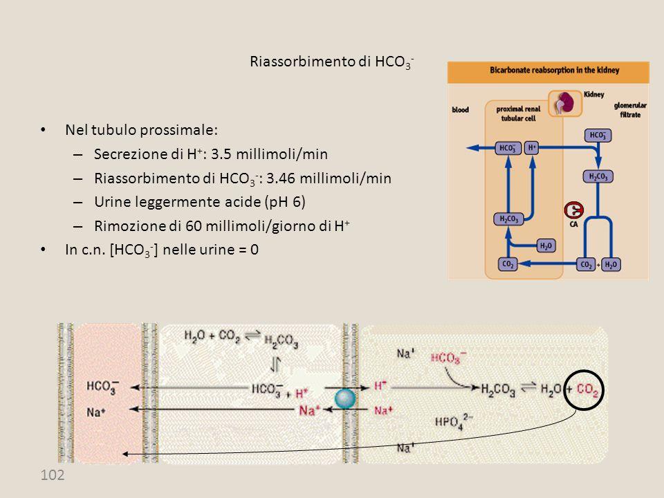 Riassorbimento di HCO3-