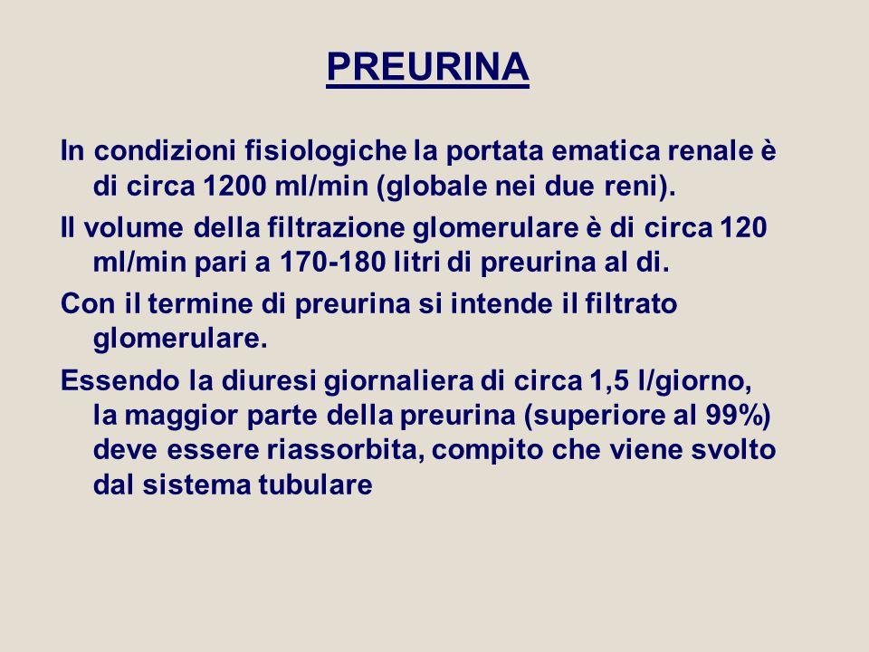 PREURINA In condizioni fisiologiche la portata ematica renale è di circa 1200 ml/min (globale nei due reni).