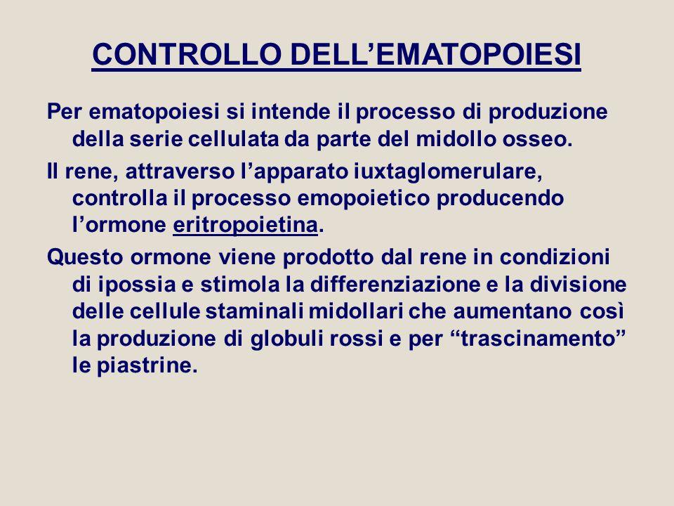 CONTROLLO DELL'EMATOPOIESI
