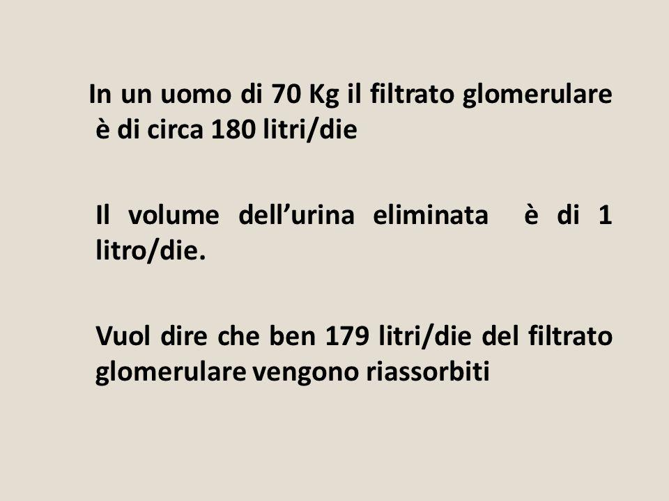 In un uomo di 70 Kg il filtrato glomerulare è di circa 180 litri/die