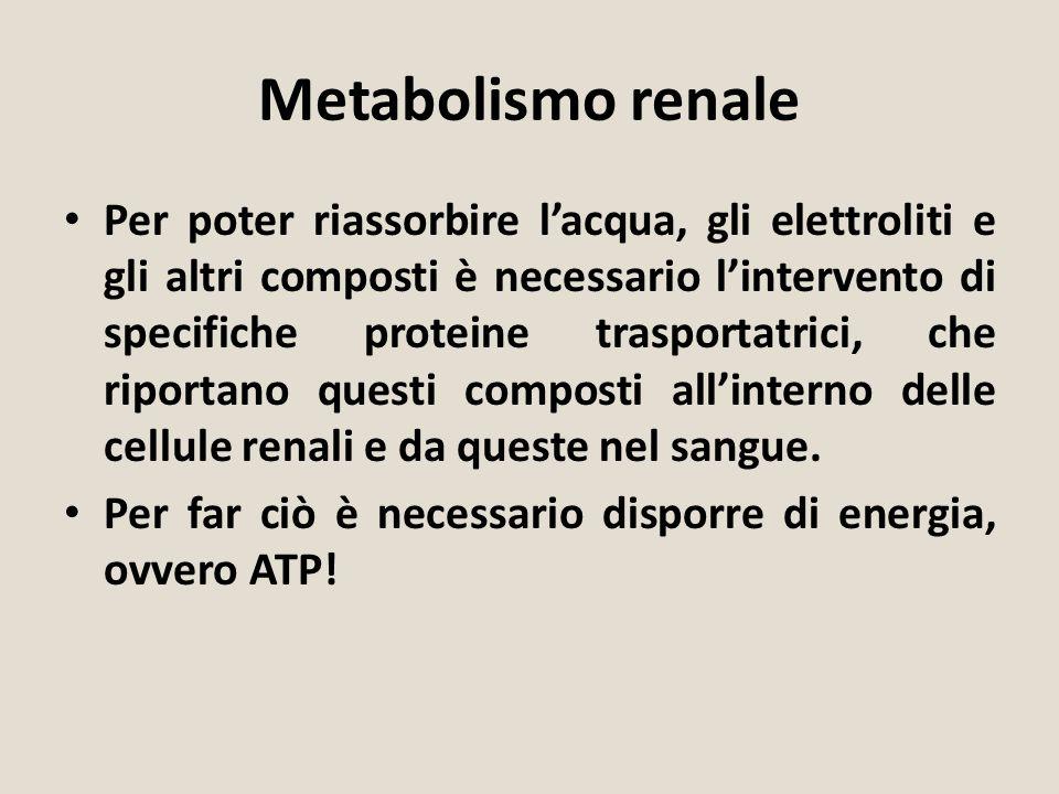 Metabolismo renale