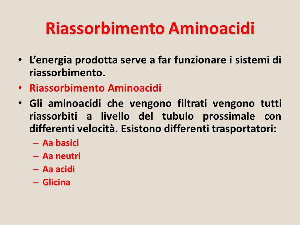 Riassorbimento Aminoacidi