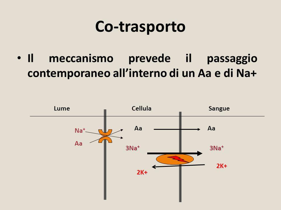Co-trasporto Il meccanismo prevede il passaggio contemporaneo all'interno di un Aa e di Na+ Lume. Cellula.