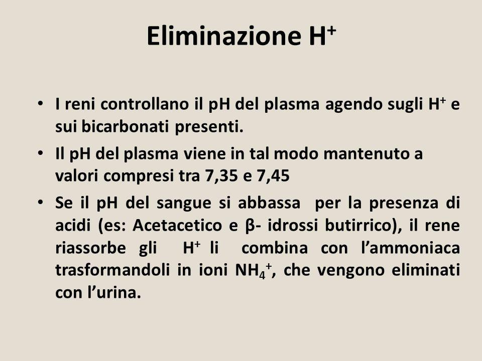 Eliminazione H+ I reni controllano il pH del plasma agendo sugli H+ e sui bicarbonati presenti.