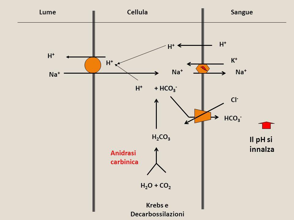 Krebs e Decarbossilazioni