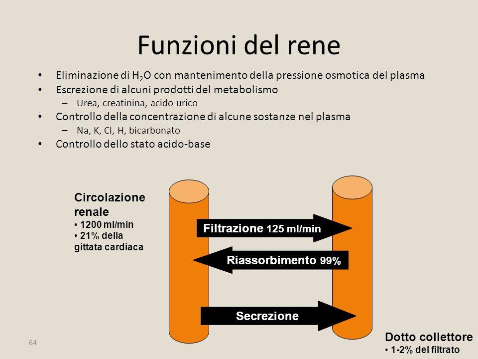 Funzioni del rene Eliminazione di H2O con mantenimento della pressione osmotica del plasma. Escrezione di alcuni prodotti del metabolismo.