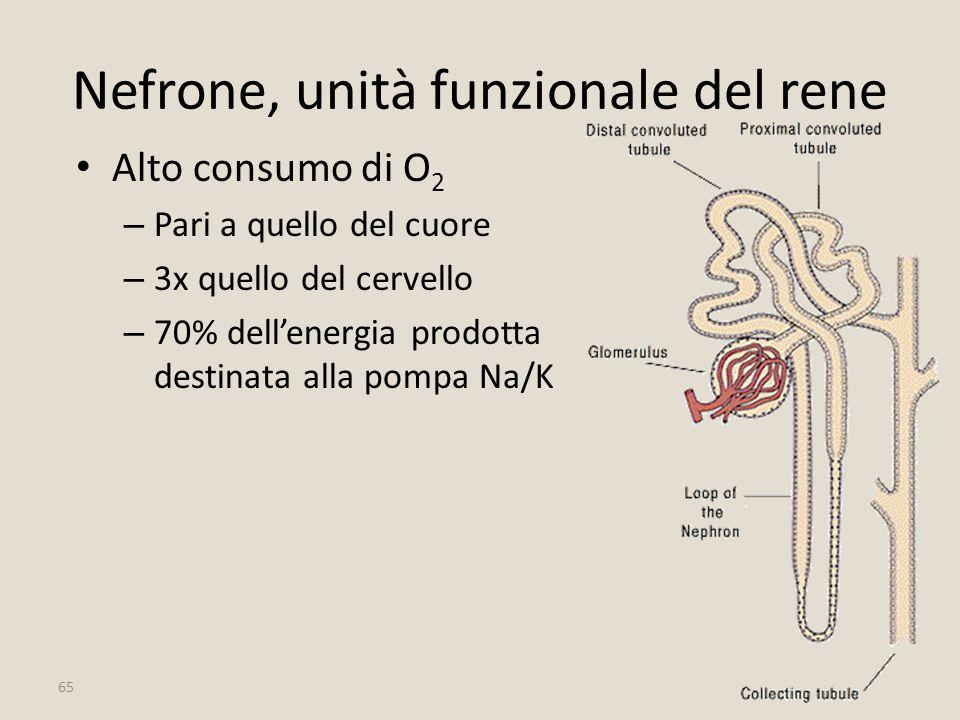 Nefrone, unità funzionale del rene