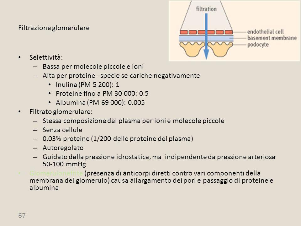 Filtrazione glomerulare