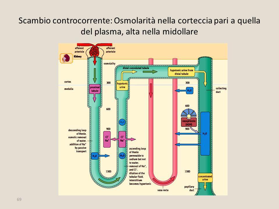 Scambio controcorrente: Osmolarità nella corteccia pari a quella del plasma, alta nella midollare
