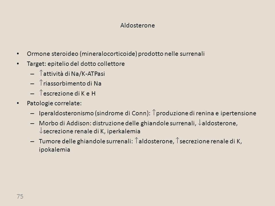 Aldosterone Ormone steroideo (mineralocorticoide) prodotto nelle surrenali. Target: epitelio del dotto collettore.