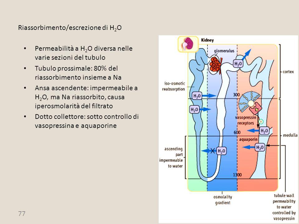Riassorbimento/escrezione di H2O