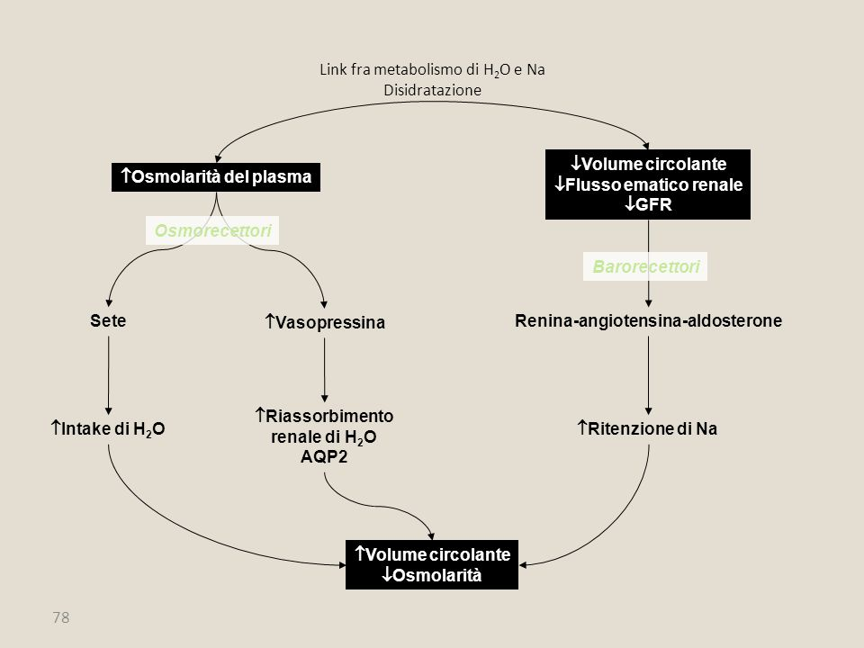 Link fra metabolismo di H2O e Na Disidratazione