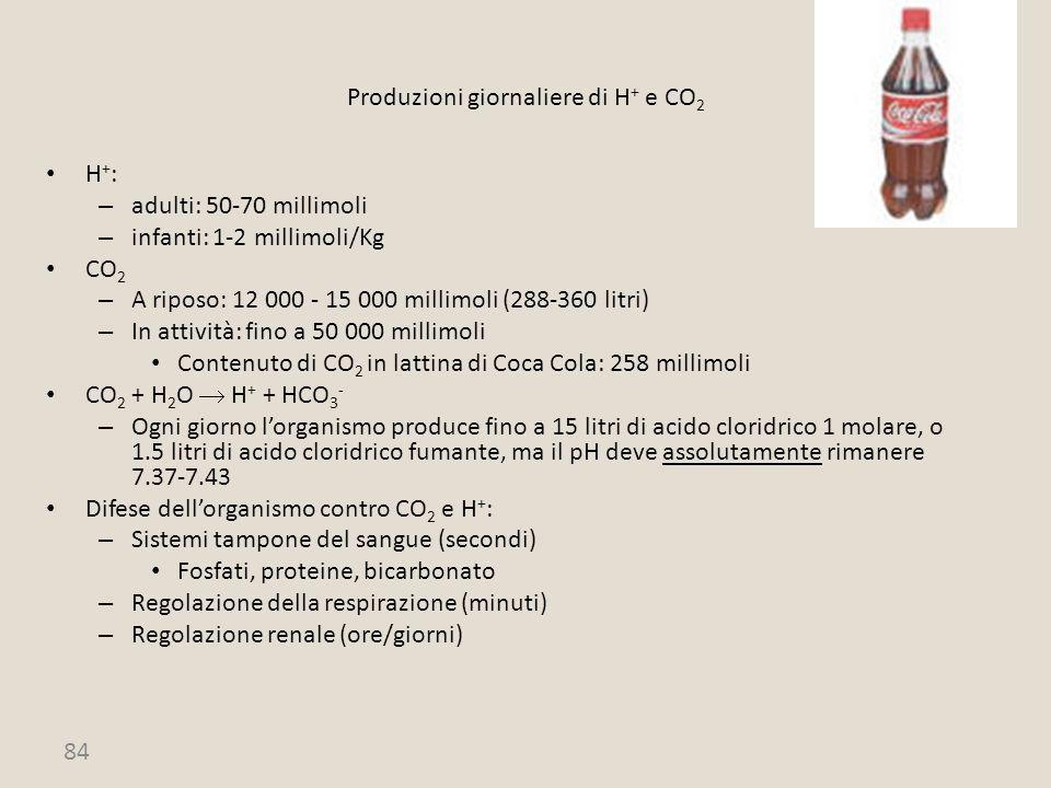 Produzioni giornaliere di H+ e CO2