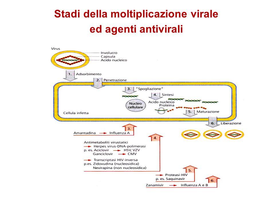 Stadi della moltiplicazione virale