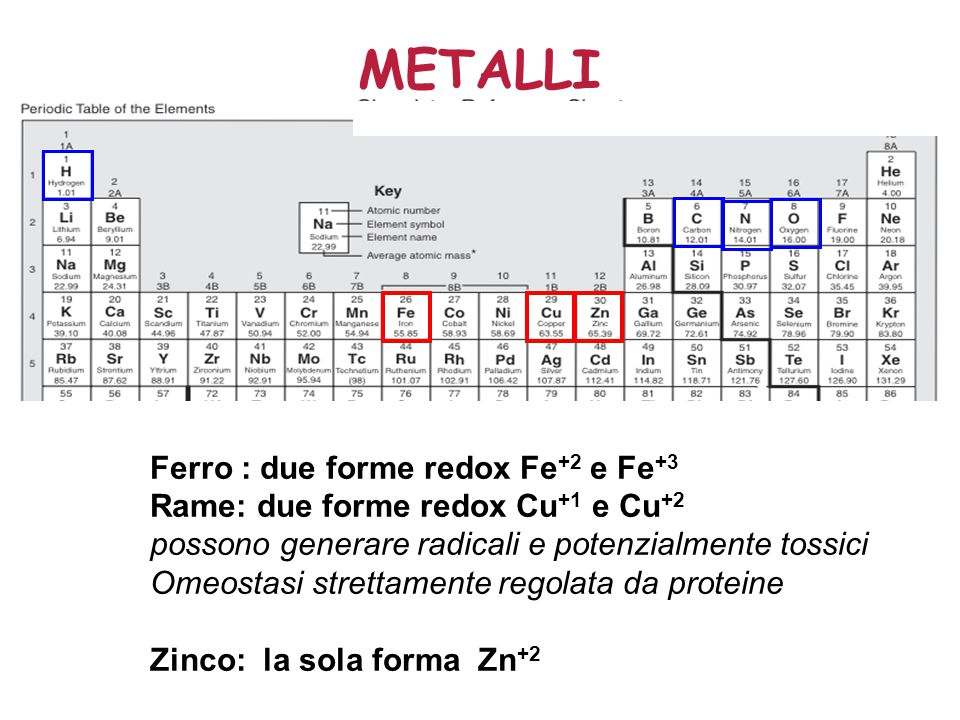 METALLI Ferro : due forme redox Fe+2 e Fe+3