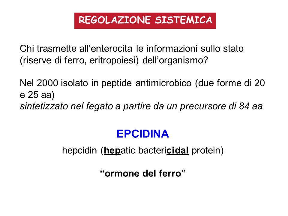 hepcidin (hepatic bactericidal protein)
