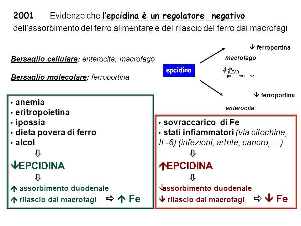 2001 Evidenze che l'epcidina è un regolatore negativo