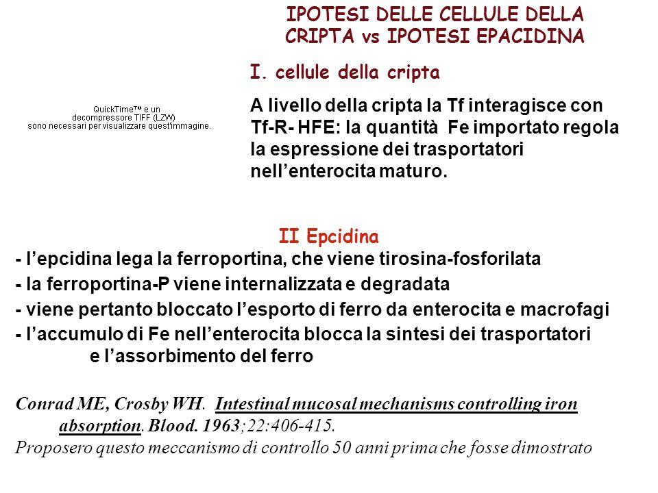 IPOTESI DELLE CELLULE DELLA CRIPTA vs IPOTESI EPACIDINA