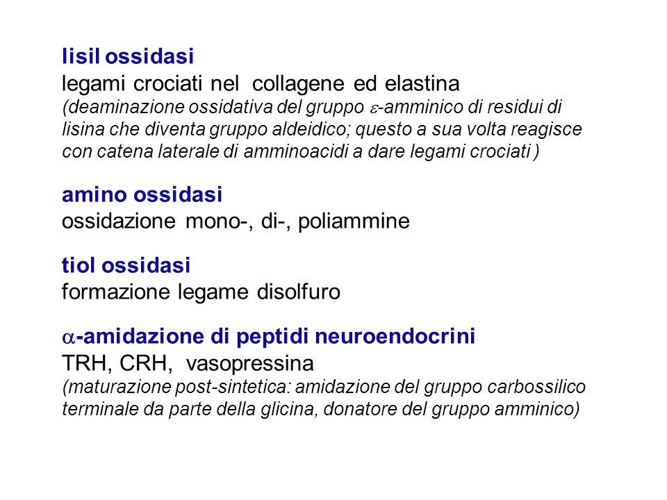 legami crociati nel collagene ed elastina
