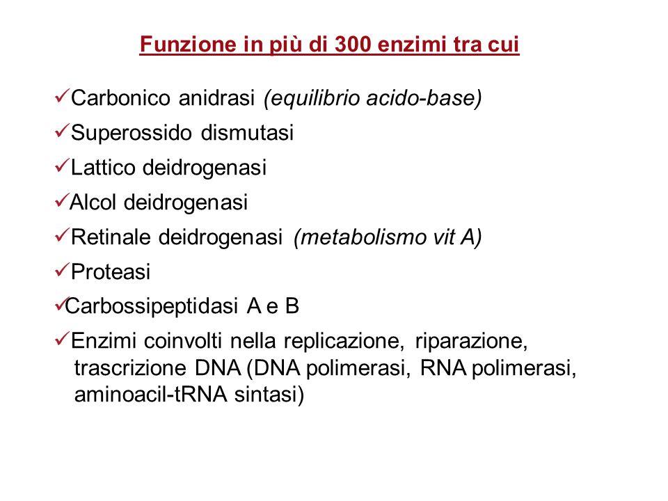 Funzione in più di 300 enzimi tra cui