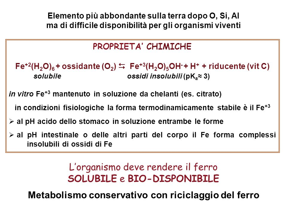 Metabolismo conservativo con riciclaggio del ferro
