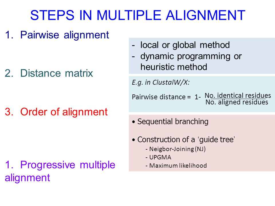 STEPS IN MULTIPLE ALIGNMENT
