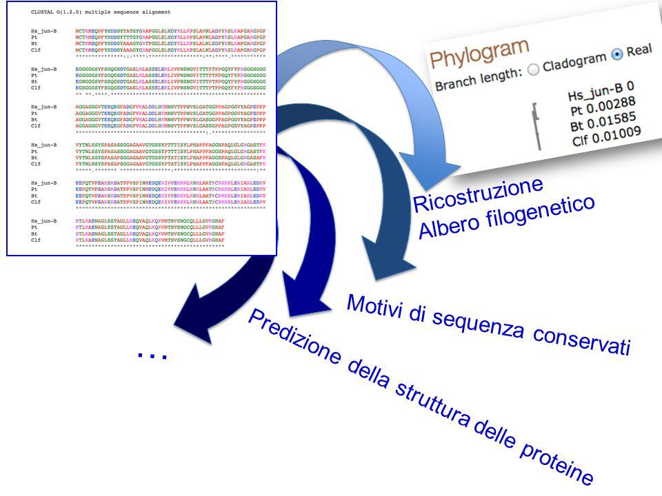… Ricostruzione Albero filogenetico Motivi di sequenza conservati