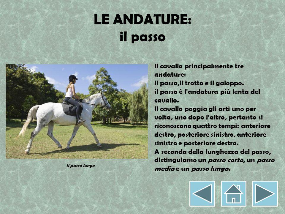 LE ANDATURE: il passo Il cavallo principalmente tre andature: