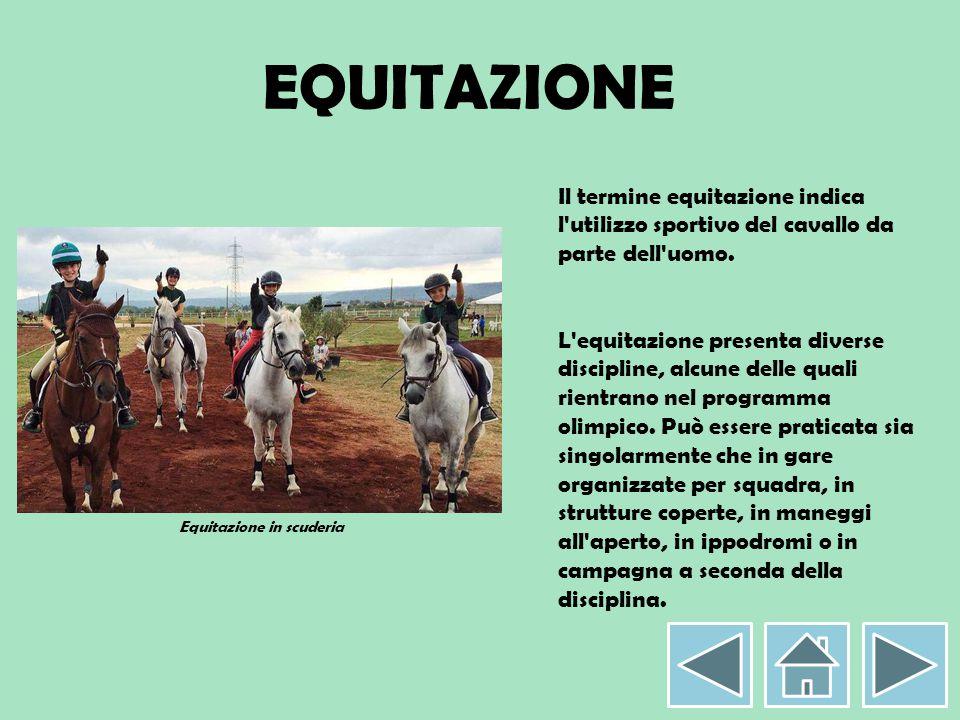 Equitazione in scuderia