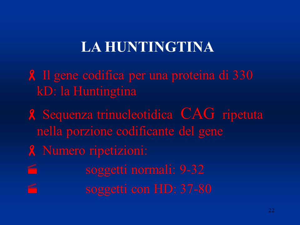LA HUNTINGTINA Il gene codifica per una proteina di 330 kD: la Huntingtina.