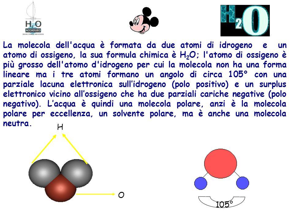 La molecola dell acqua è formata da due atomi di idrogeno e un atomo di ossigeno, la sua formula chimica è H2O; l atomo di ossigeno è più grosso dell atomo d idrogeno per cui la molecola non ha una forma lineare ma i tre atomi formano un angolo di circa 105° con una parziale lacuna elettronica sull'idrogeno (polo positivo) e un surplus elettronico vicino all'ossigeno che ha due parziali cariche negative (polo negativo). L'acqua è quindi una molecola polare, anzi è la molecola polare per eccellenza, un solvente polare, ma è anche una molecola neutra.