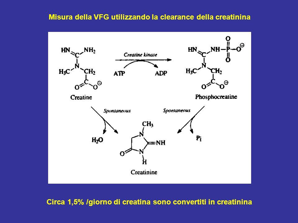 Circa 1,5% /giorno di creatina sono convertiti in creatinina