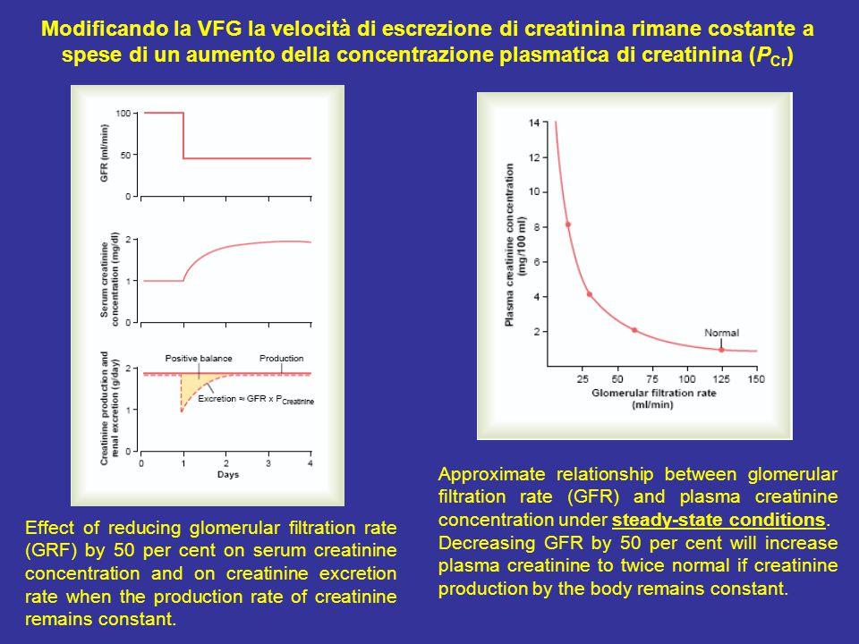 Modificando la VFG la velocità di escrezione di creatinina rimane costante a spese di un aumento della concentrazione plasmatica di creatinina (PCr)