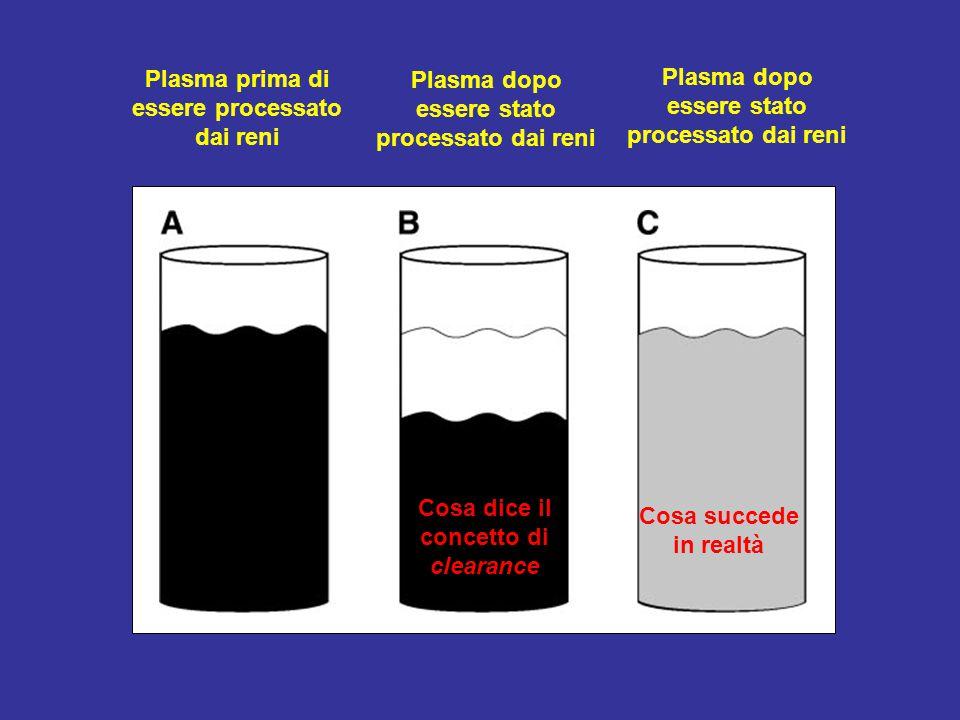 Plasma prima di essere processato dai reni