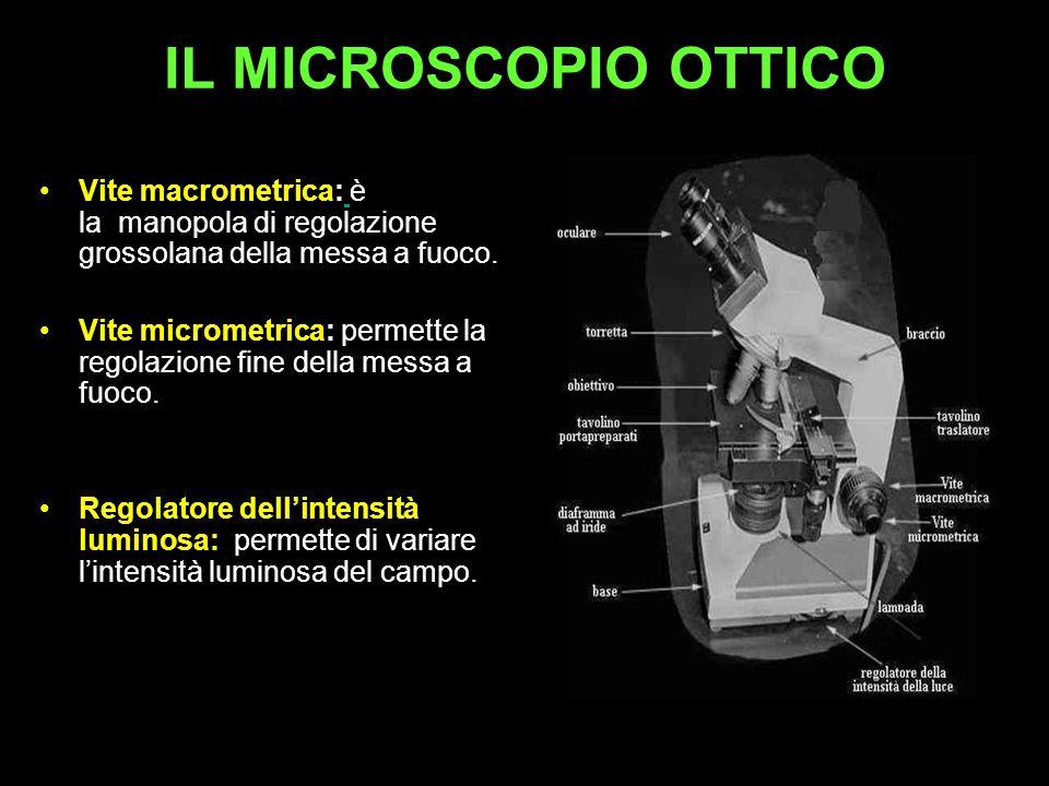 IL MICROSCOPIO OTTICO Vite macrometrica: è la manopola di regolazione grossolana della messa a fuoco.