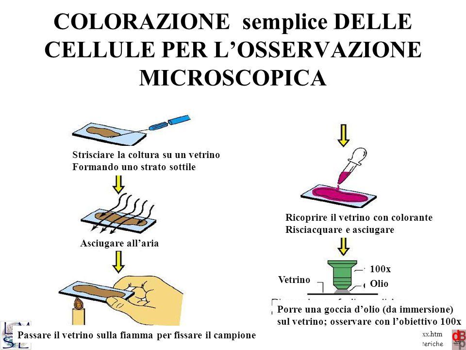 COLORAZIONE semplice DELLE CELLULE PER L'OSSERVAZIONE MICROSCOPICA